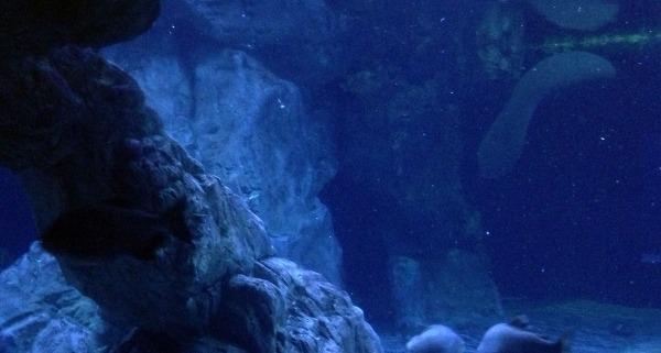 Illuminazione a led all'Acquario di Genova